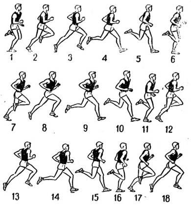 Специальные беговые упражнения в легкой атлетике реферат 1280